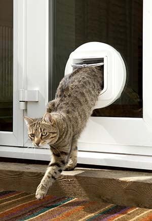 Cat and Dog Flaps in Suffolk