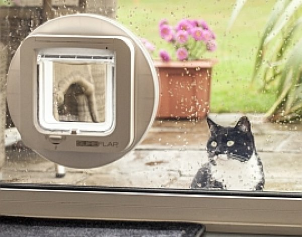 Fitting Cat-flaps Ipswich - Is a flap-door suitable for my pet?